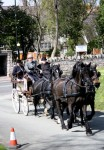 Horses and Carriage at St Asaph Cathedral