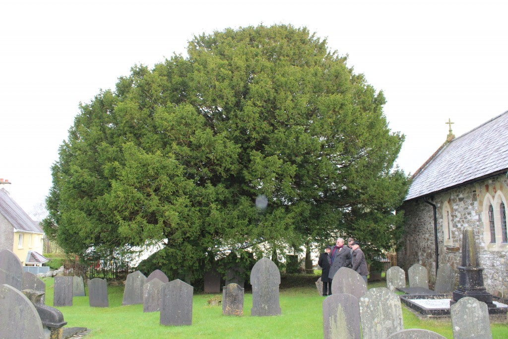 There's a veteran yew, around 1,000 years old